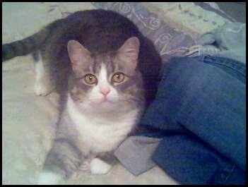 My kitty, Minuet