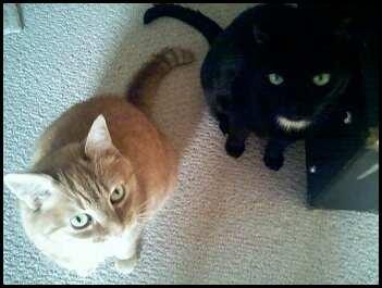 My kitties, Clover and Romeo