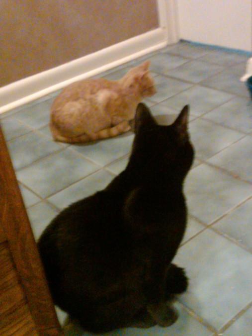 Kitties Butterscotch and Chance